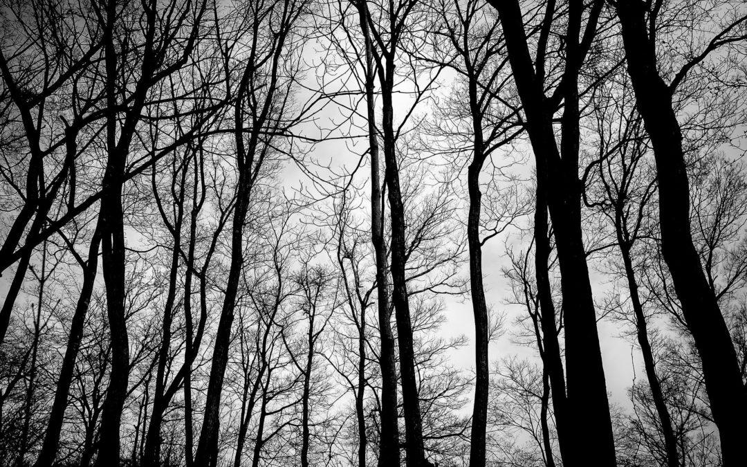 Zwischen Verlust und Verzweiflung – Richtig mit Trauer umgehen