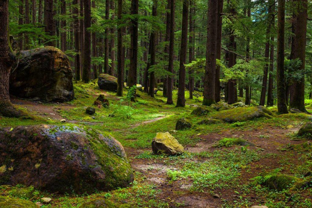Steinwandern im Waldviertel