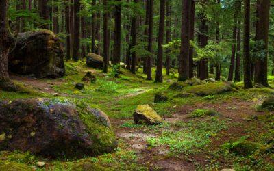 Berühmte Steine in Österreich und wo sie zu finden sind